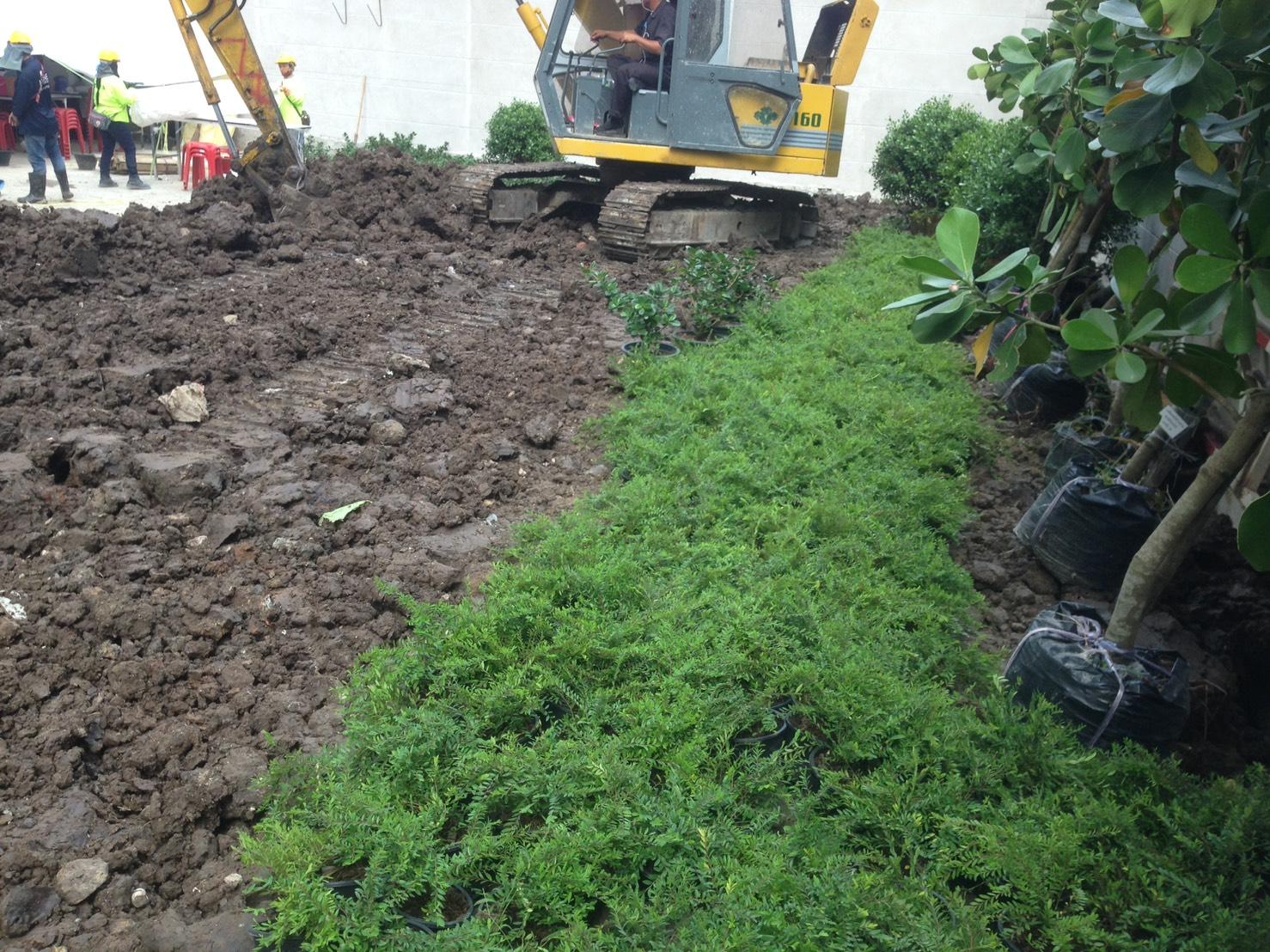 งานถมดิน หน้าดิน จัดสวน คอนโด ถนนเพชรบุรี